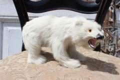 Oude ijsbeer